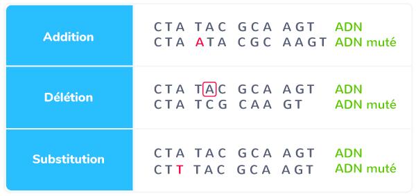 ADN différentes mutations ponctuelles